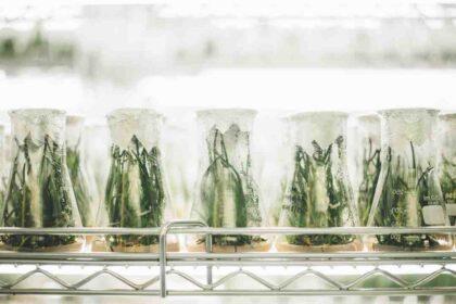 Avis genomincir science et bien etre