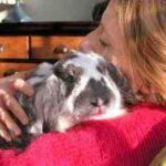 Comment relaxer un lapin nain ?