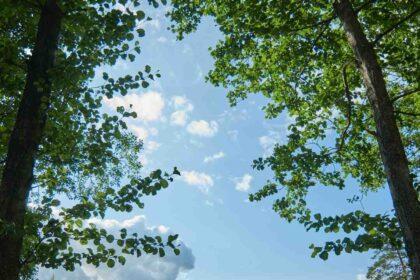 Méditation pleine conscience 91